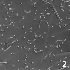 Fluorapatite aciculare: luminosità di fondo, vitalità ed espressività naturale (ingrandimento 10.000x)